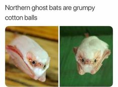 awesome Animal Edition Memes That Are Just Up to The Mark (37+ Pictures)