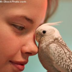 If you're calm around your bird, your bird is more likely to respond with the same energy
