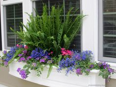 a Kimberly fern, lobelia (periwinkle), verbena (purple) a low maintenance trailing vine with great blooms all summer long, geraniums (pink) and more verbena . Window Box Plants, Window Box Flowers, Window Planter Boxes, Flower Boxes, Planter Ideas, Flower Ideas, Container Plants, Container Gardening, Flower Containers