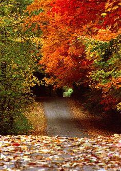 Autumn journeys.....