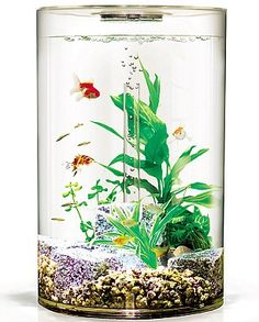 Aquarium BIUBE PURE   ...........click here to find out more     googydog.com