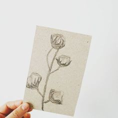 cotton flowers drawing Illustrations, Personalized Items, Drawings, Flowers, Cotton, How To Make, Illustration, Sketches, Drawing