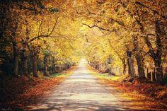 Way into Autumn by Edina Janega on 500px