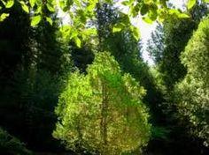 """Résultat de recherche d'images pour """"arbre vert mousse"""""""
