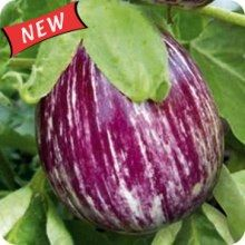 such a pretty eggplant, will need to try these next year
