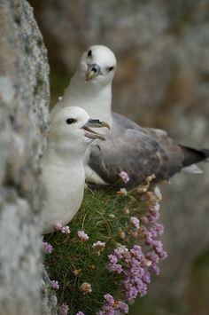 gulls`