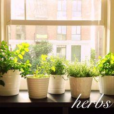 Beautiful herb garden | #Horticool #ApartmentGardening #Gardening