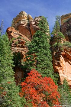 Fall colors along the West Fork of the Oak Creek Trail, Coconino National Forest, Sedona, Arizona, USA