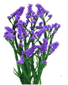 66 best purple green and white flowers images on pinterest white white purple and pink mightylinksfo
