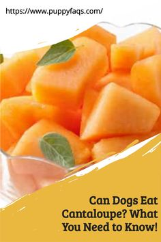 Learn more about this delicious fruit and the benefits it can have for your pup. It's safe to feed them cantaloupe, as long as you give a small amount at a time. Your dog will love eating something new that is so yummy. Click here for more info on how to introduce it safely into their diet! Cantaloupe Benefits, Diarrhea In Dogs, Dog Diet, Can Dogs Eat, Love Eat, Delicious Fruit, Dog Eating, Healthy Fruits