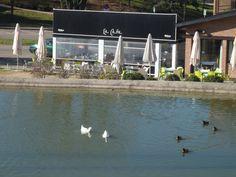 Una cervecita al lado de uno de los lagos del PARQUE PARIS DE LAS ROZAS