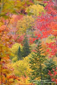 Photo credit: Jeremy Sheaffer, The Wilderness Society of Maine Foliage in the High Peaks region