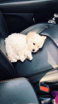 Super Cute Puppies, Baby Animals Super Cute, Cute Baby Dogs, Cute Little Puppies, Cute Dogs And Puppies, Cute Little Animals, Cute Funny Animals, Doggies, Tiny Puppies