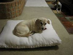 This is great.....Make a tie blanket and then stuff it with the filling from old pillows.Recycle old pillows: no sew dog bed (or floor pillows for the kids)