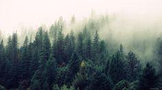 Картинки по запросу фотообои лес в тумане