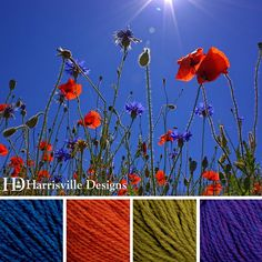 'Bright and Lively' color palette features our HIGHLAND yarn in Cobalt, Poppy, Tundra and Violet.