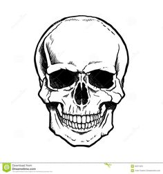 Black And White Human Skull With Jaw Stock Photos - Image: 32371323
