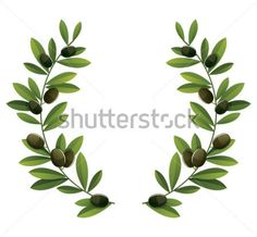 olivo dibujo