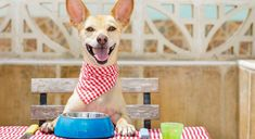 Bone broth doesn't only tout big benefits for us humans. Our canine companions also reap many rewards from indulging in the tasty broth. Read on to find out the top health benefits for both humans and dogs.