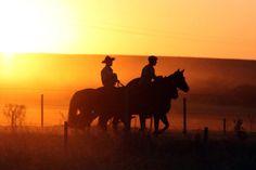 Conociendo a los caballos - por José Guilherme Martini.