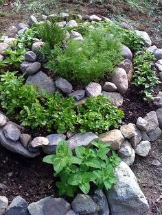 I love the unordinary in this unique spiraled herb garden