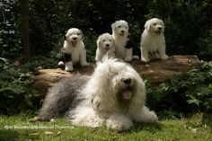 megan met haar puppy's 7 weken oud