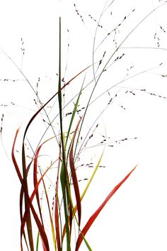 By the Pond Botanical Flowers, Botanical Prints, Prairie Fire, Shape Collage, Seed Pods, Arte Floral, Natural Wonders, Natural World, Oeuvre D'art