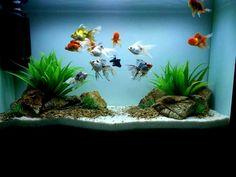 goldfish aquarium design - Google Search                                                                                                                                                                                 More