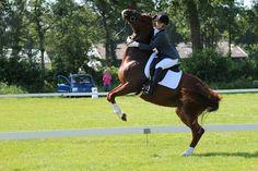 Paarden kunnen ook verschieten maar toch blijven het toffe dieren