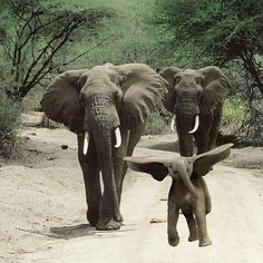 #love this  #elephant