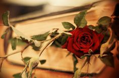 rose from the book by diamondriri
