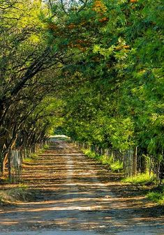 A lovely tree covered lane in the Sundays River Valley, South Africa. Beautiful Roads, Beautiful Places, Country Walk, Country Roads, Back Road, Africa Travel, Countryside, South Africa, Paths