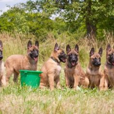 Dogs 11 #Dog #dogs #animal #animals #nature #paw #photo #photography #fliiby #images #yyazilim #people #nature