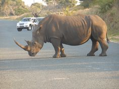 Road block in the iSimangaliso Wetlands Park, previously known as the St Lucia Wetlands Park. The only place in the world where you can see rhino on a snorkeling safari! For snorkeling, day trips and safaris into iSimangaliso, contact Extreme Nature Tours. www.extremenaturetours.co.za