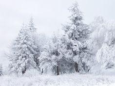 Winter snowy scene at Shipka Pass in Bulgaria. Photo by Psy guy Winter Szenen, I Love Winter, Winter Trees, Snowy Trees, Winter White, Winter Months, Winter Christmas, Merry Christmas, Chi Lites