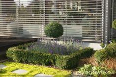 Madżenie ogrodnika... Kiedyś tu.... - strona 263 - Forum ogrodnicze - Ogrodowisko