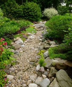 dry creek bed: larger rocks primarily along edges, piled up with a few plants in between and spilling over the edges