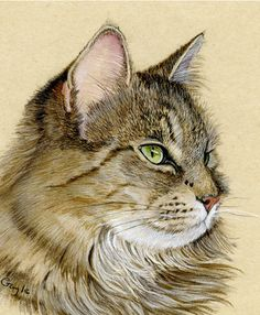 Gayle Mason Fine Art: 'Up Close and Personal' - Macro Cats