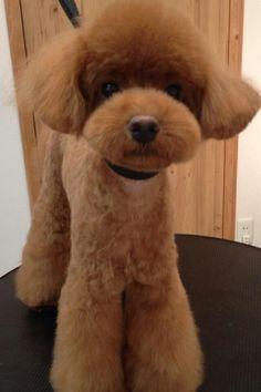 True teddy bear cut!