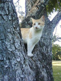 Leland in a tree.