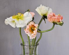 Poppies.  Photo: Mia Linnman
