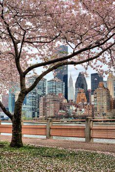 Manhattan view from Roosevelt Island ~ New York City, New York