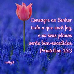 #Provérbios #Sabedoria #DeusNoComando #OsPlanosDeDeusSãoMaiores #DeusFiel #rosiigiil