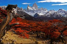 Patagonias Lush Diversity