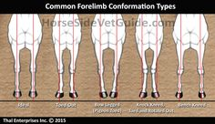 Common Forelimb Types Sept 2015