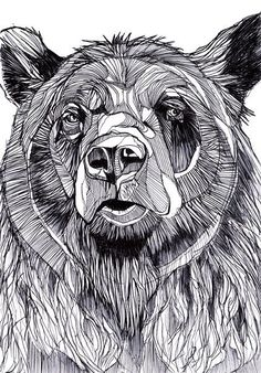 Cat Coloring Page, Bear Claws, Sketch Inspiration, Love Illustration, Bear Art, Animal Sketches, Spirit Animal, Art Inspo, Painting & Drawing