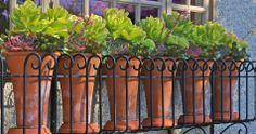 Pot_Inc_PointGrey_Garden_Design