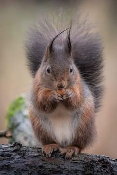 Happy Squirrel, Squirrel Pictures, Tier Fotos, Rodents, Cute Funny Animals, Squirrels, Autumn, Black And White, Winter