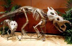 1Stack - Dinosaur Fossils