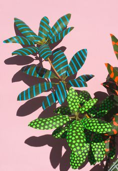 <p>The photographic series Wonderplants was created this summer in a small city garden in Porto, Portugal. Using leaves from the botanical gardens, tapes and stickers from the local stationary shop an